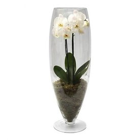 Fleur.nl - Orchidee White in vase Majestic