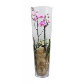 Fleur.nl - Orchidee pink golden glas