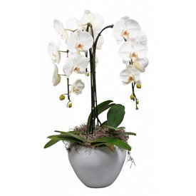 Fleur.nl - Orchidee fountain cascade