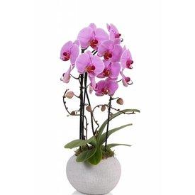 Fleur.nl - Orchidee Pink Togo