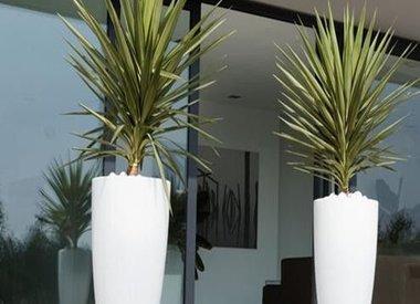 Kantoorplanten in sierpot