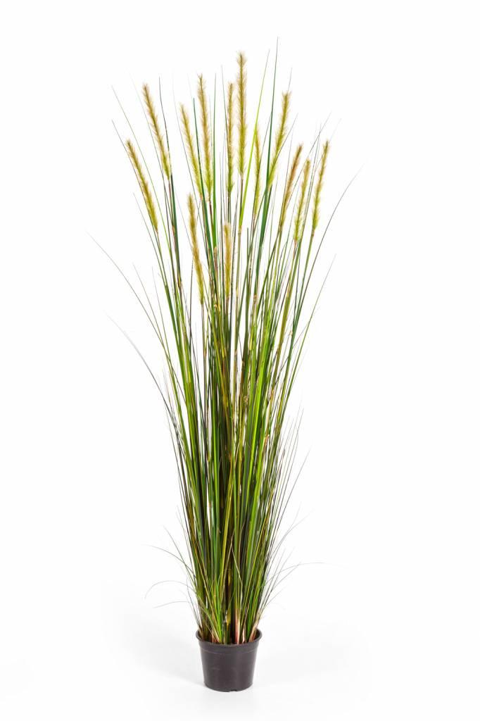 grass foxtail kunstplant eenvoudig en snel online. Black Bedroom Furniture Sets. Home Design Ideas
