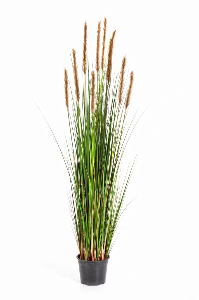 grass foxtail kunstplant eenvoudig en snel online bestellen. Black Bedroom Furniture Sets. Home Design Ideas