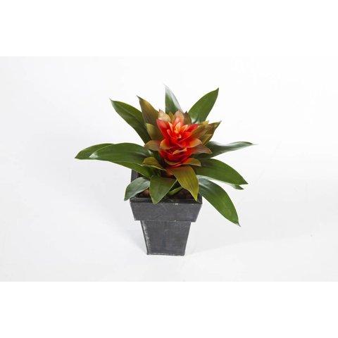 Bromelia - kunstplant