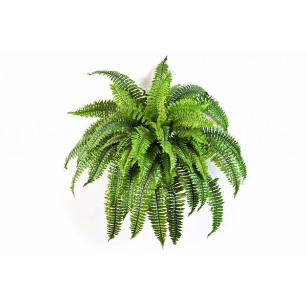 Boston Fern - kunstplant