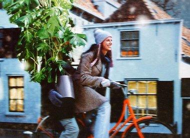 Rotterdamse kerstbomen gratis opgehaald