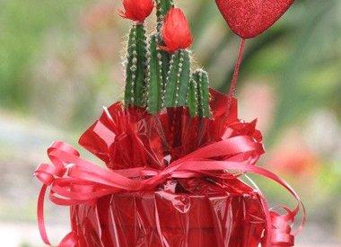 Cactus populair geschenk op Valentijnsdag
