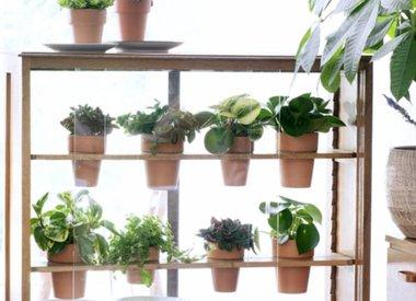 Vetplanten, verzorgingstips en onderhoud