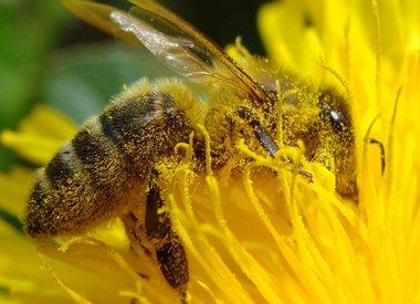 Steun Nederlandse bijen