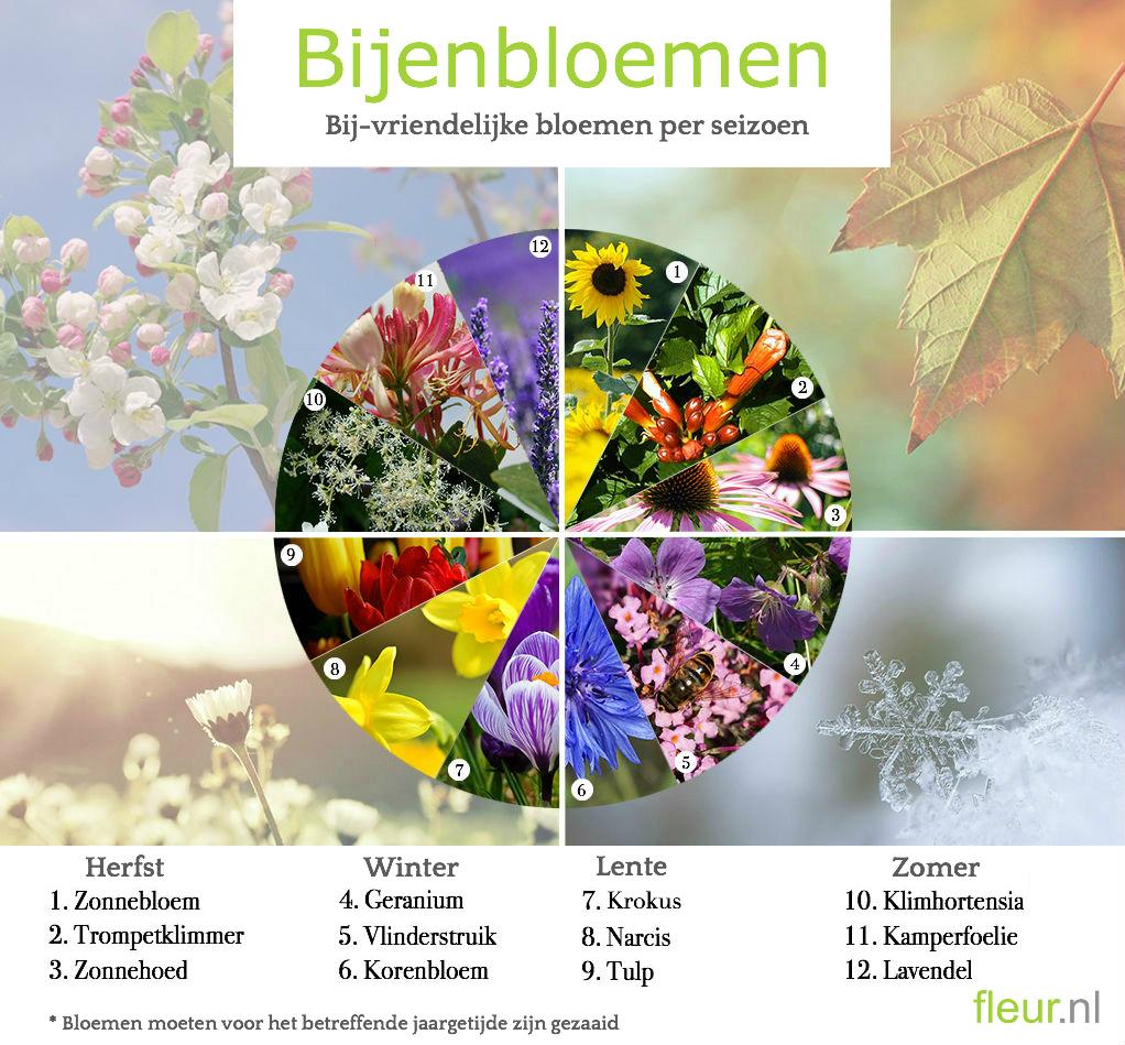 Planten Voor Bijen.Steun Nederlandse Bijen Fleur Nl