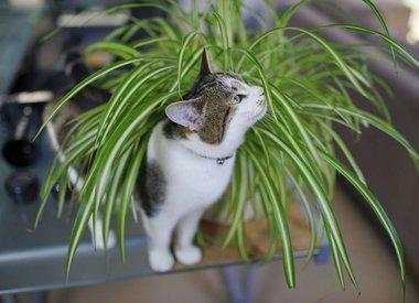 Giftige kamerplanten voor huisdieren