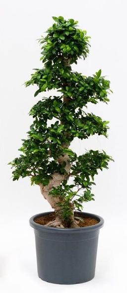Bonsai Voor Binnen.Kamerplanten Trends 2019 Binnenplanten Inspiratie Alle Toppers