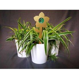 Fleur.nl - Plant-E