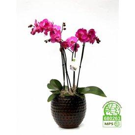 Fleur.nl - Orchidee Palmas Purple in pot
