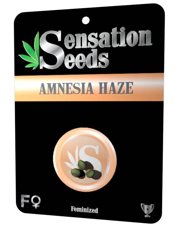 Amnesia Haze - Feminizada