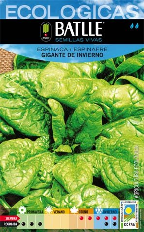 Batlle Giant Winter Spinach