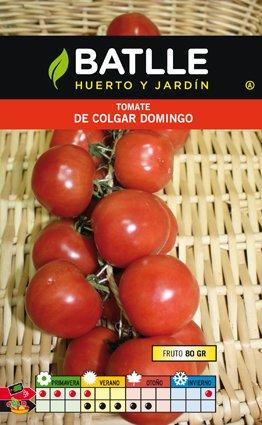 Batlle Domingo Hanging Tomato