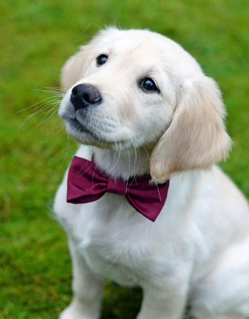 Nadelspitze Hundefliege - individualisiert