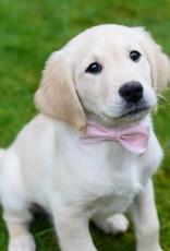 Nadelspitze Hundefliege