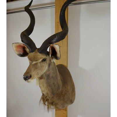 Kudu shoulder mount