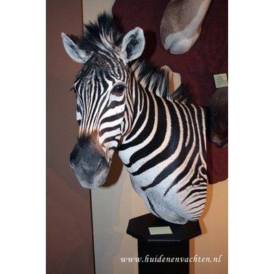Preparaat Zebra