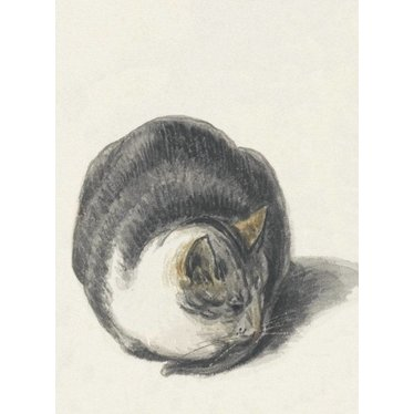 Cat Drawing, Magnet
