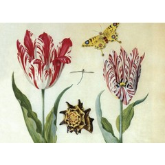 Two Tulips, a Shell and a Butterfly