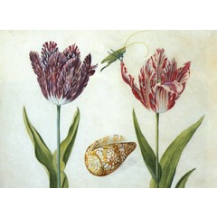 Two Tulips, a Shell and a Grasshopper