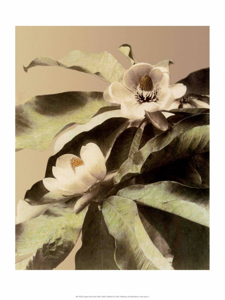 Lotus Flower Vintage Japanese Photography It All Starts With A