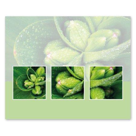 Romance Bloemen- & Kadokaartjes Romance - Groen