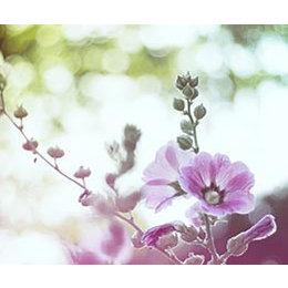 InFlore Hibiscus