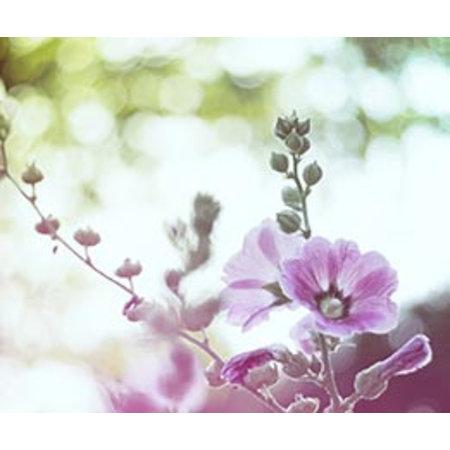 InFlore Kadokaartjes InFlore - Hibiscus