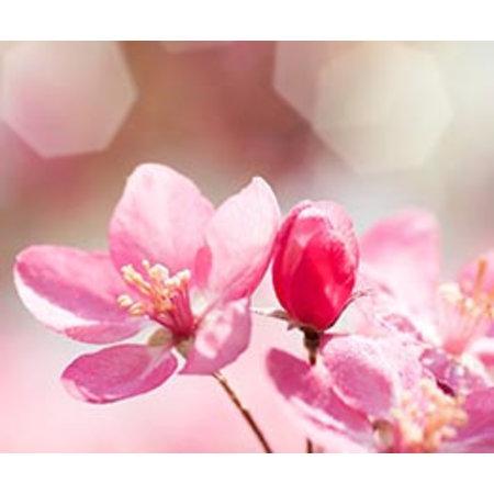 InFlore Kadokaartjes InFlore - Pink blossom