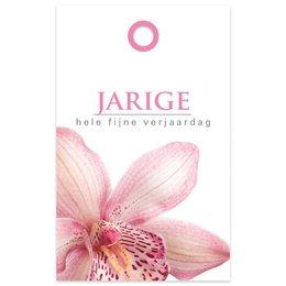 """""""Basic"""" Fleur Jarige"""
