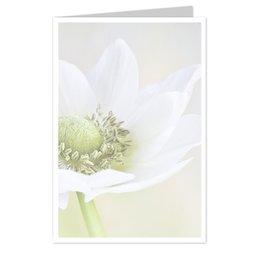 wenskaarten Blanco bloem