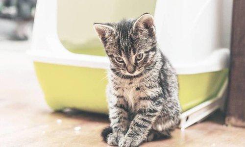 Kittens, verzorging & opvoeding