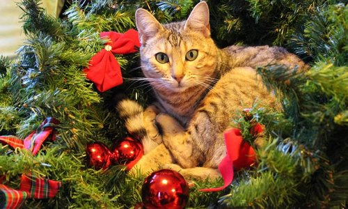 10 tips om je kat uit de kerstboom te houden!