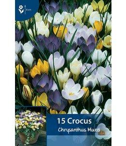 Crocus Chrysanthus gemengd