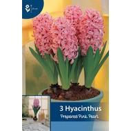 Prepared Hyacinth Pink Pearl (for indoor flowering)