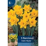 Narzissen Dutch Master