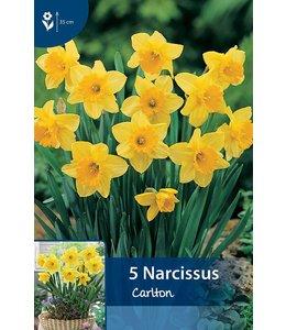 Narcis Carlton