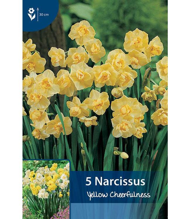 Narzissen Yellow Cheerfulness