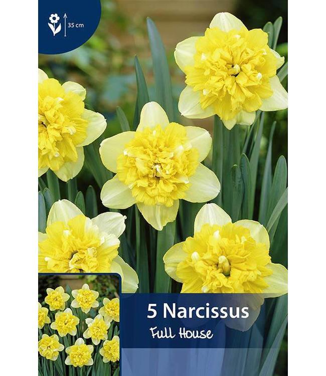 Narcis Full House