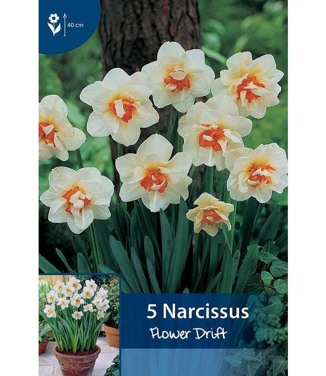 Narzissen Flower Drift