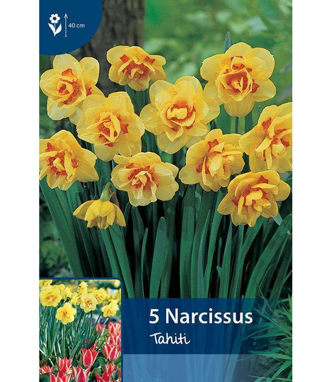 Narcis Tahiti