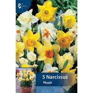 Narcis Gemengd