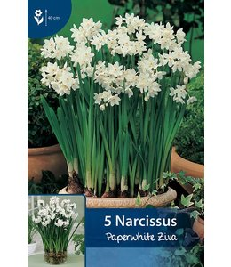 Narcis Paperwhite Ziva (voor in huis)