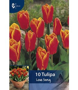 Tulip Love Song