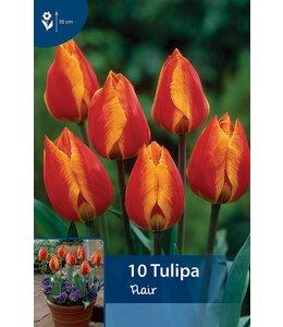 Tulpen Flair