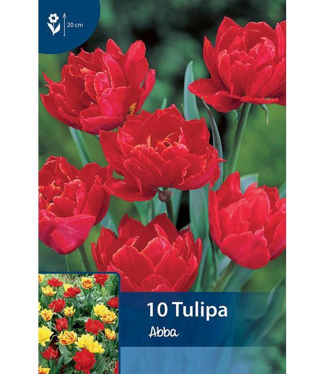 Tulpen Abba